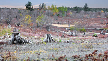 Several dead and cut trees in the open land in Michigan upper peninsula
