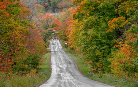 Colorful autumn trees by rural road in Michigan