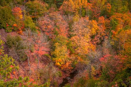 Aerial shot of colorful fall foliage along Hammell creek in Michigan upper peninsula