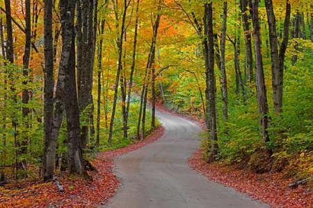 Colorful autumn trees  along winding road in Michigan upper peninsula near Picture Rocks lake shore on the way to Beaver lake Standard-Bild