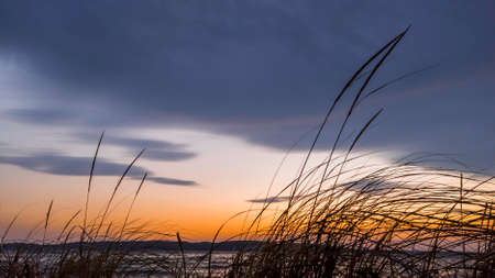 Tall grass at the beach against colorful evening sky Standard-Bild
