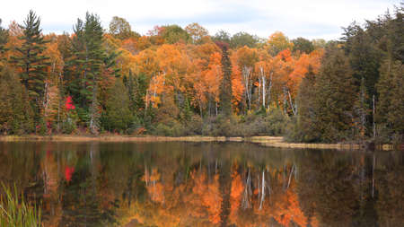 Autumn tree reflections in Little Beaver lake in Pictured rocks national lake shore in Michigan upper peninsula.