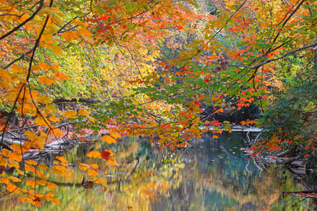 Colorful Maple trees along the creek side in rural Michigan