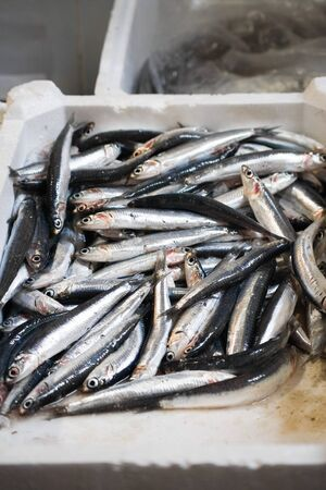 Fresh anchovies at a fish market in Italy Stock Photo