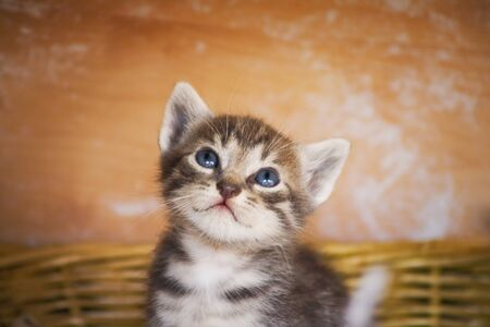 A curious kitten looking around Stock Photo