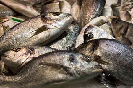 A pile of Gilt-head bream at fish market. Unordered, raw, fresh. Stock Photo