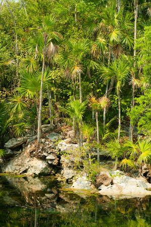 riviera maya: Estanque en selva de Xel-ha, Riviera Maya, Mexico