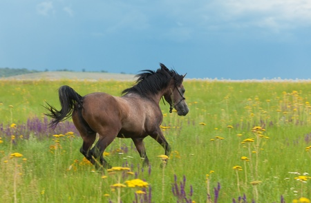 The horse runs gallop on a green field with a flowers