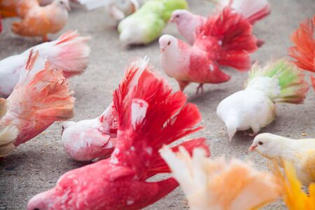 organisms: A bunch of colored doves from Thailand