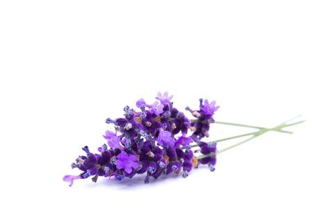 Lavendel geïsoleerd op witte achtergrond