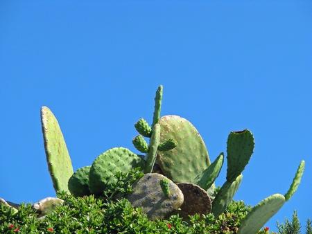 green cactus bush and big blue sky Stock Photo - 10108091