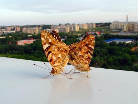 butterflies in hug