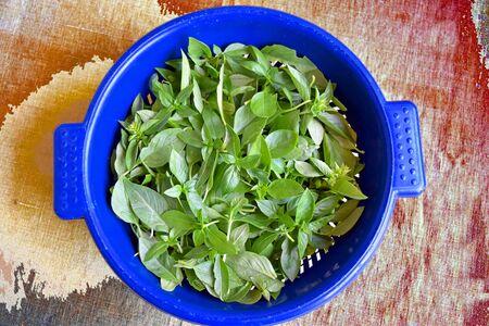 Basil leafs