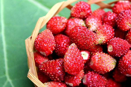 A small basket of delicious juicy ripe wild strawberries Stock Photo