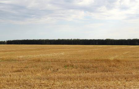 empty cleaned field