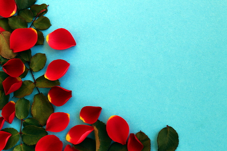 Red rose petals scattered on a blue background