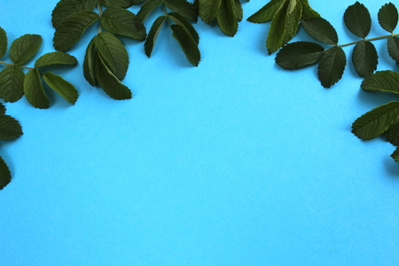 blue background decorated with succulent green leaves