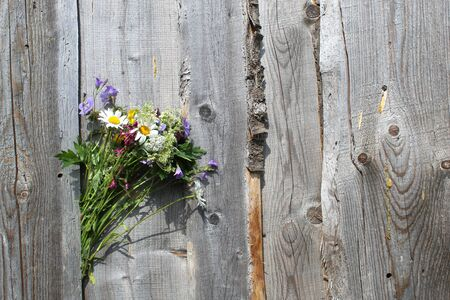 A bouquet of wild flowers tucked between the boards on the fence 免版税图像 - 126060485