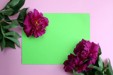 lush peony lie on a green background