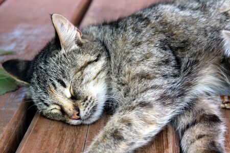Gray cat lying on the floor and sleeps Stock Photo