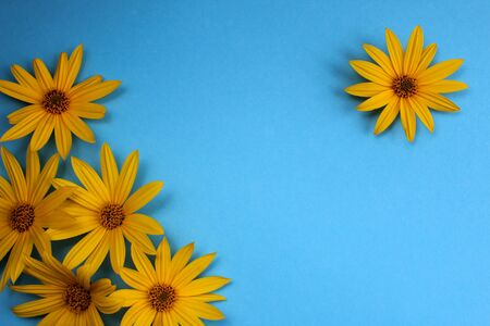 yellow daisy flowers on a blue background