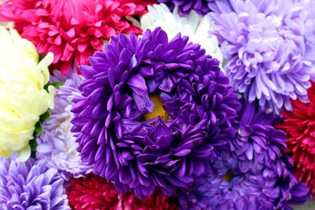 texture bouquet of asters of different colors ripped in autumn Stock Photo