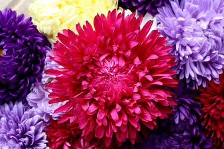 bouquet d'aster de texture au milieu un bourgeon rouge