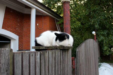 black and white cat sleeps on a fence Stock Photo