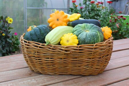 basket with fresh harvested vegetables harvested in autumn Stock Photo