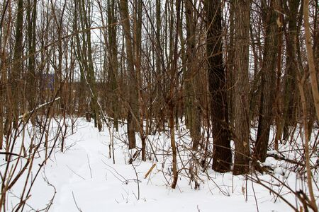 Winter forest covered with white snow with a dog tra Stock fotó