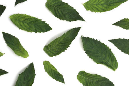 Texture of green fresh mint leaves lie on a white background