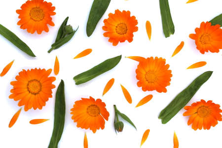 Texture of orange flowers, petals and leaves on a white background
