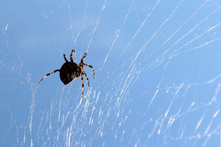 Large spider hanging on a web against the sky