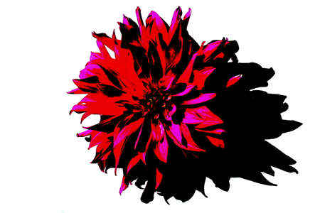 Abstract color of dahlia flower in unusual design Stock Photo
