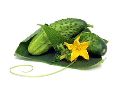 Two fresh cucumbers with flower and leaves on white background