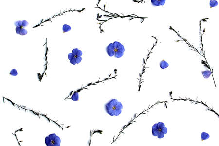 Texture blue little flowers and twigs lie on a white background