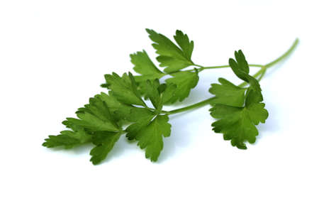 One branch of green parsley on a white background Stock Photo