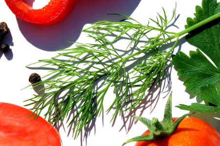 Fresh, green sprig of dill lies on a white background