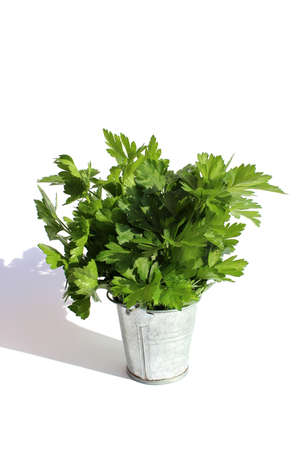 A bouquet of green parsley stands in a small bucket