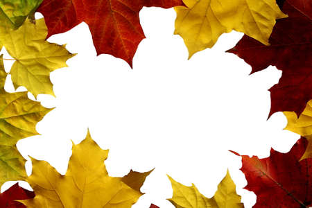 Autumn maple leaves lie on a white background in the form of a frame with a place for textiles Archivio Fotografico