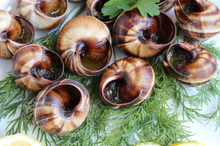 Cooked grape snails in a plate with herbs Stockfoto