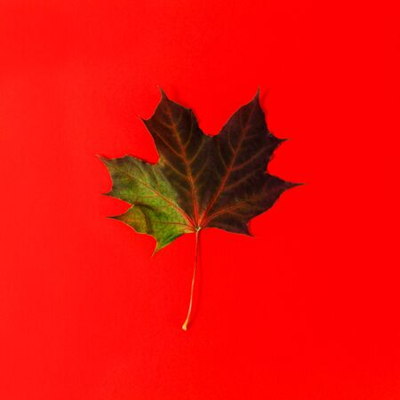 One maple leaf on the red background.