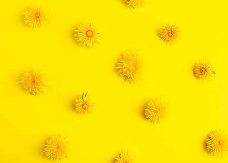 Yellow dandelions on a yellow background. Flatlay style. Pattern.