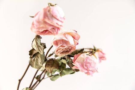 Three dried rose buds on a grey background with space for your text.