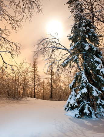 backwoods: winter forest at night