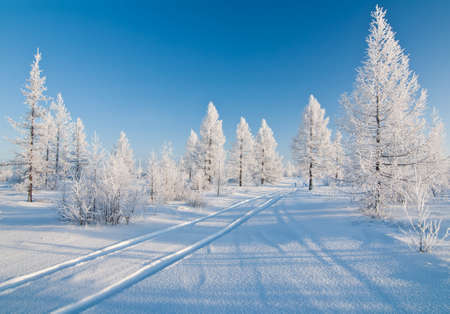 winter forest whith road Stock Photo