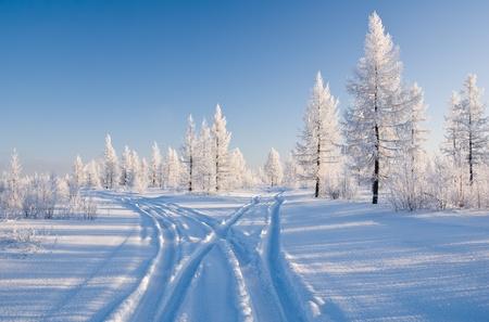 cruce de caminos: bosque de invierno con la carretera Foto de archivo