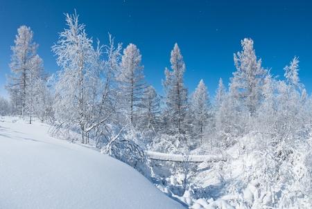 backwoods: winter forest