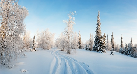 sunny cold days: winter forest