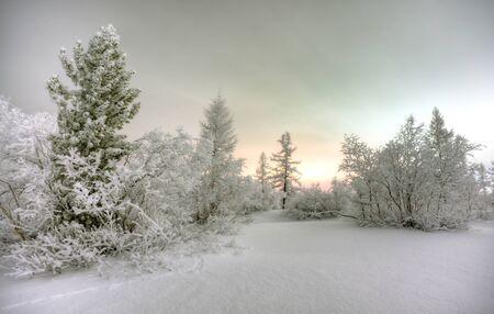 wonderful night in winter forest